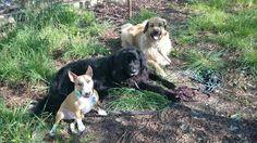 Jak wychować szczęśliwego psa: STOPNIE PSIEJ EDUKACJI. Autor artykułu: PSYchologi...