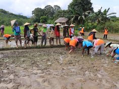 Gotong royong menyiapkan area tanam padi organik