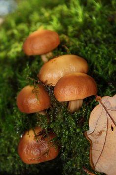 Forêt du Gâvre - France