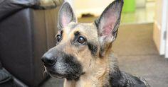 Jade, la neonata che si chiama come il cane che l'ha salvata