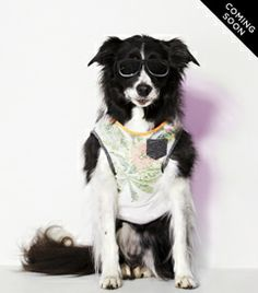 The American Beagle Outfitters Look Book Is a Dog Lover's Dream - Fashionista I Love Dogs, Puppy Love, Cute Dogs, American Beagle, Dog Line, Cute Dog Clothes, Animal Projects, Woodland Creatures, Mens Outfitters