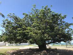 Baobá, Olinda | PE