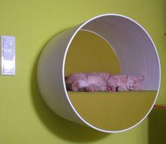 Cats Lounge » Katzenbaum Design - Kratzbaum Katzenmöbel Naturholz - treestyle