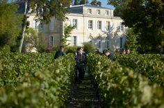 Vendanges au Château Belgrave, Grand Cru Classé Haut-Médoc et Vignoble Dourthe - www.dourthe.com