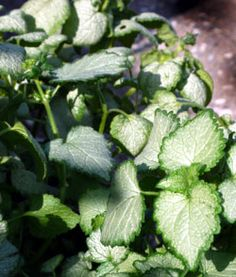 10 Great Plants for Shady Gardens  beyond hostas