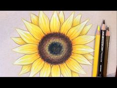 Sunflower Drawing Tutorial – Drawing Ideas and Tutorials Simple Flower Drawing, Flower Drawing Tutorials, Art Tutorials, Drawing Flowers, Drawing Ideas, Paint Flowers, Flower Drawings, Sunflower Sketches, Sunflower Drawing