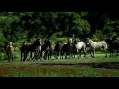 ▶ HORSES, THE ANDALUSIAN TOUCH-Ganaderia Henriette Boissevain - YouTube