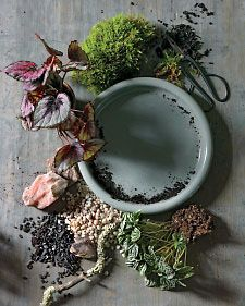 How To Make A Dish Garden - Home Improvement Blog – The Apron by The Home Depot