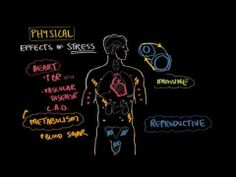 ▶ Physical effects of stress - YouTube
