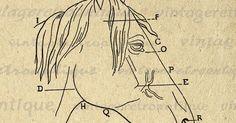 Printable Image Horse Head Diagram Graphic Digital Download Artwork Vintage Clip Art Jpg Png Eps 18x18 HQ 300dpi No.1954 @ vintageretroantique.etsy.com #DigitalArt #Printable #Art #VintageRetroAntique #Digital #Clipart #Download