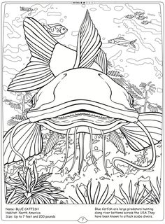 Welcome To Dover Publications River Monsters Of The World Blue Catfish
