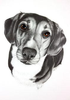 Pencil drawing of dog olivia art in 2019 рисунки, собаки. Dog Pencil Drawing, Pencil Drawings Tumblr, Pencil Drawings Of Animals, Love Drawings, Disney Drawings, Art Drawings, Pencil Drawing Tutorials, Drawing Ideas, Banksy