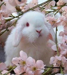 Very cute Holland lop bunny in the pink flowers Animals And Pets, Baby Animals, Cute Animals, Spring Animals, Baby Bunnies, Cute Bunny, Bunny Rabbits, White Bunnies, White Rabbits