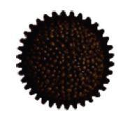 Marechal Café com Rum  Bolo de chocolate com cobertura de chocolate e crocantes de chocolate preto.  Recheado com creme de café com rum.