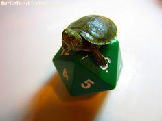 Geek Turtle