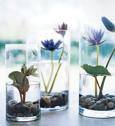 Learn how to grow water lilies in glasses. #waterplantscontainer