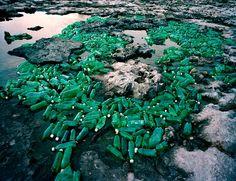 Earth Day Plastic Trash Photo Show in NYC - Bird In Flight