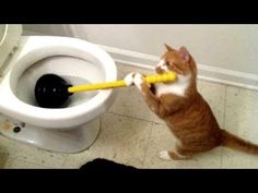 Funny TOILET CATS are the ULTIMATE TRY NOT TO LAUGH challenge - Funniest CAT compilation - YouTube