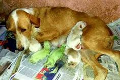 Is it just me or are 2 of the puppies green?