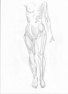 anatomy  figure drawing pencil on paper 210x297mm