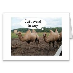 CAMELS SAY NO HUMP DAY-IT'S YOUR BIRTHDAY