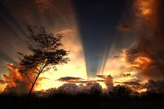 Goden rays sky nature clouds sun trees gold beauty earth rays