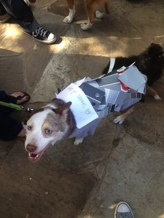 50 Shades Of Grey | The 57 Greatest Pet Costumes EVER