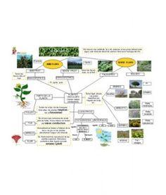 Mapa Conceptual Les Plantes. Mapes conceptuals per ajudar els mestres a organitzar i estructurar els continguts