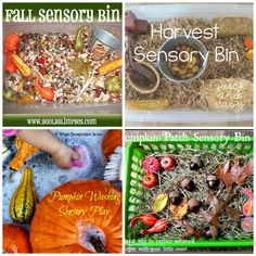 Harvest sensory bins perfect for hands-on play and learning this Fall. Celebrate the colors, smells, and items Fall brings! Fall Sensory Bin, Sensory Bins, Sensory Activities, Sensory Play, Learning Methods, Autumn Activities, Fall Harvest, Fall Crafts, Little Ones