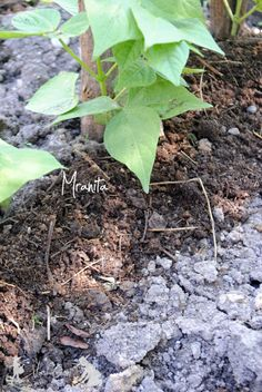 Fruit, Places, Garden, Agriculture, Garten, Lawn And Garden, Gardens, Gardening, Outdoor