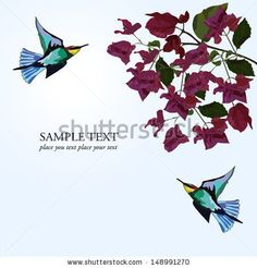 Floral background with bougainvillea vector illustration