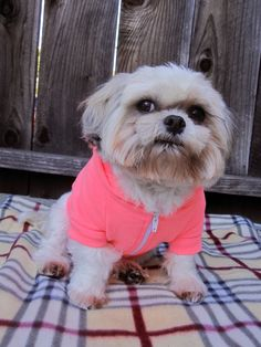 Sweet Baby dog looks adorable in this neon-pink hoodie. Check out itraits.com and learn more: unique graphic tees and hoodies for pets. Use promo code springstyle16 and save.