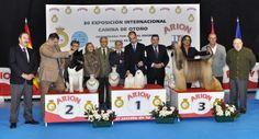 BIS Absoluto Talavera 2013. #Talavera #Exposicion #Canina