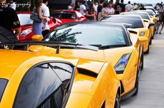 Yellow Gallardo group