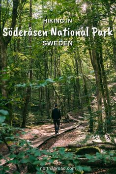Why hike in Söderåsen National Park in Sweden? Here you will find easy hiking trails in some of Scanias most beautiful lush forests surrounded by high cliffs and flowing streams. #nationalpark #hiking #sweden #europe