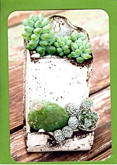 Cactus/Succulent Matchbox. Hang it!