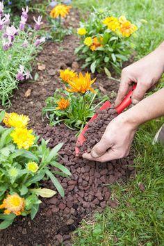 Planter une plante grimpante dans un massif de fleurs // Créez un magnifique massif de fleurs en l'enrichissant d'une plante grimpante. Installées sur un treillage en bois, les plantes grimpantes sont une idée déco parfaite pour les façades aveugles.