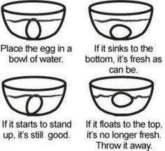Egg fact