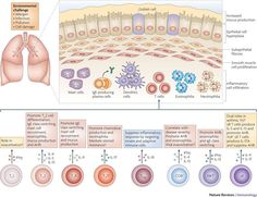 Functions of T cells in asthma: more than just TH2 cells