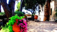 Charmed Corsica, Charmed, Plants, Planters, Plant, Planting