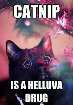Catnip is a helluva drug...