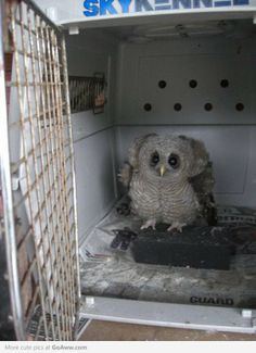 Adorable and terrifying baby owl