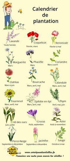 Calendrier de plantation des fleurs pour les abeilles …