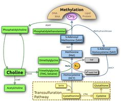 MTHFR & Choline metabolism: Acetylcholine / Choline Deficiency in Chronic Illness - the hunt for the missing egg