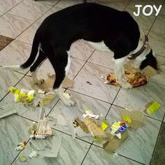 Recycling time JOY's way. lol 🐾🐾🐶 Follow JOY at her Facebook page for many more photos and videos:  https://www.facebook.com/JOYMixedBreedGirl/  #dog #instagramdogs #ilovemydog #instapuppy #dogfamily #doggie #ilovemypet #dogofinstagram #happydog #dogface #dogsofig #dogselfie #doglovers #dogsofinstaworld #petstagram #doglover  #petlover #instadog #dailypawwoof #happydog_feature #dogsubmit