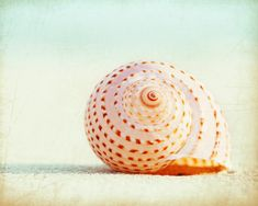 Seashell Canvas Wrap large beach gallery wrap by CarolynCochrane