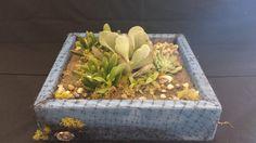 Living succulent arrangement in a large blue by UrbanSucculent, $138.00