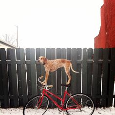 Theron Humphrey takes all sorts of photos with his dog posing in each of them