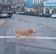 Dog Taking Itself For a Walk