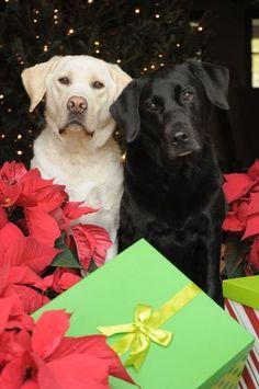 Allen Freunden und Bekannten wünschen wir ein schönes Weihnachtsfest !